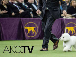 Access Dog Content 24/7 on AKC.TV