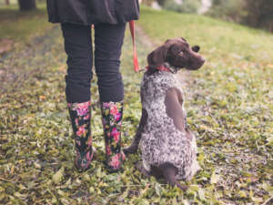 Tips on How to Make Your Dog More Comfortable in the Rain