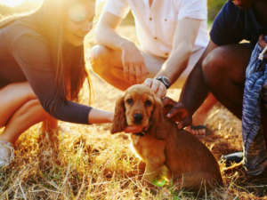 Most Valuable Gift You Can Give Your Puppy: Socialization