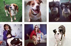 FAQ - AKC Canine Retreat